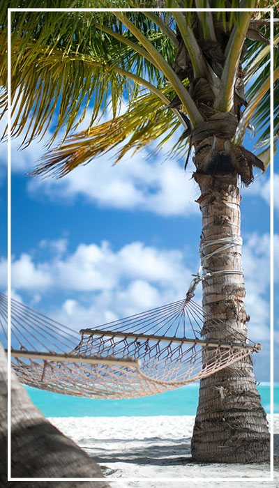 white sandy beach with hammock attached to palm trees