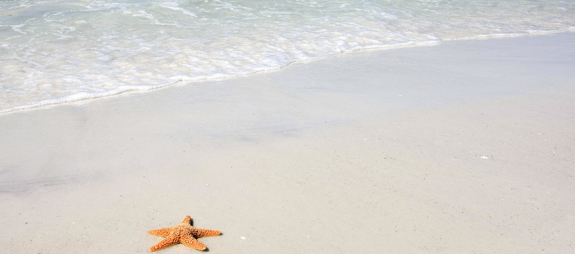 Picture of the beach and a starfish