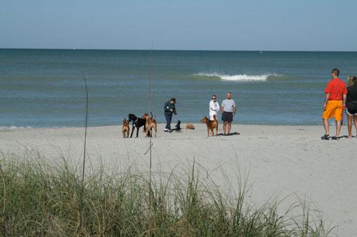 Venice Dog Friendly Beach