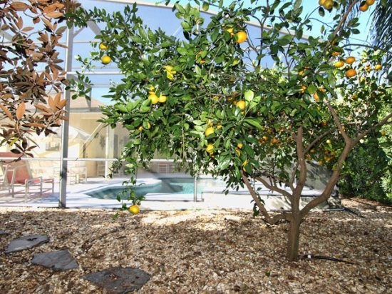 HR4P412NH-Fruit-Trees-Pool-Side