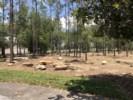 Gorgeous Woods Near Children's Playground