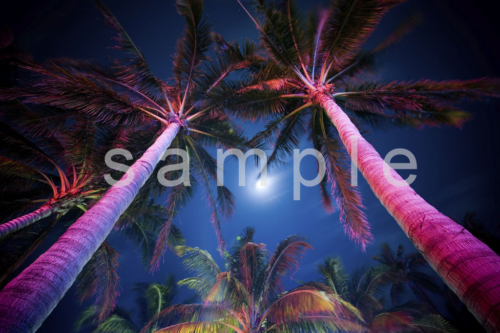 Palm Tree Setting