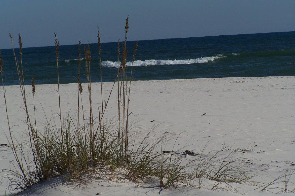 The Sea Oats.jpg