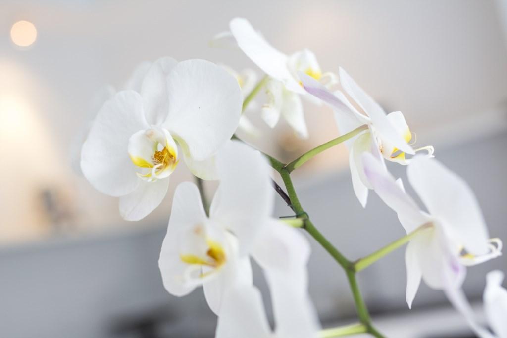 Details_Flowers.jpg