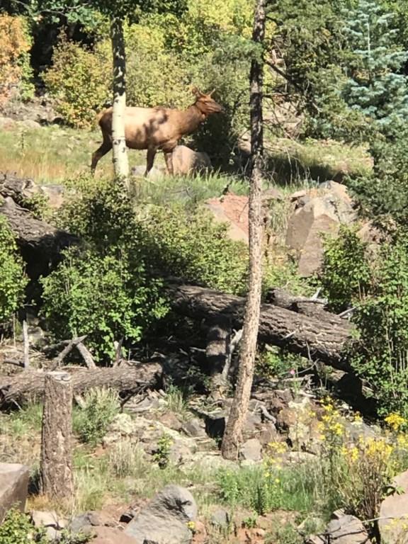 elk.png