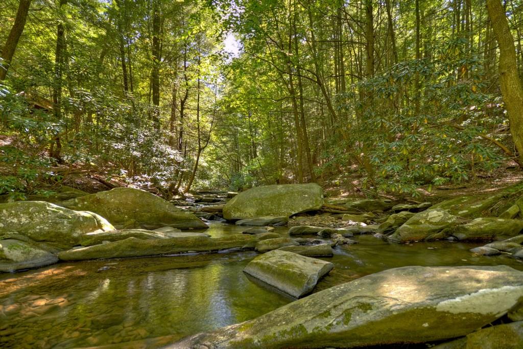 Turniptown Creek