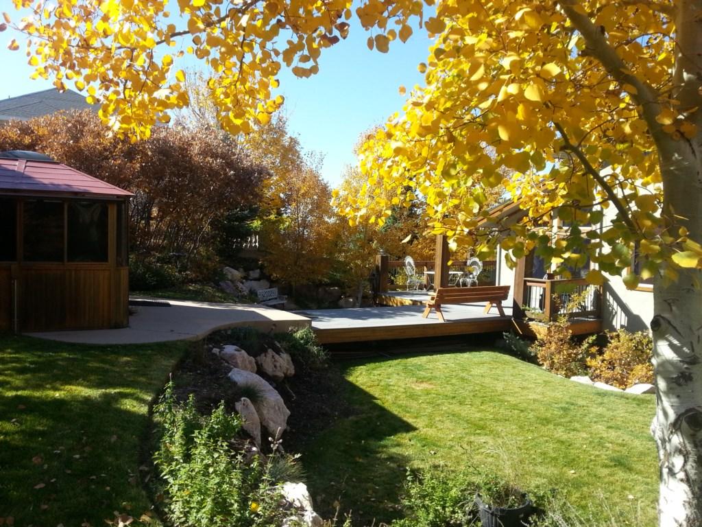 backyard in the fall
