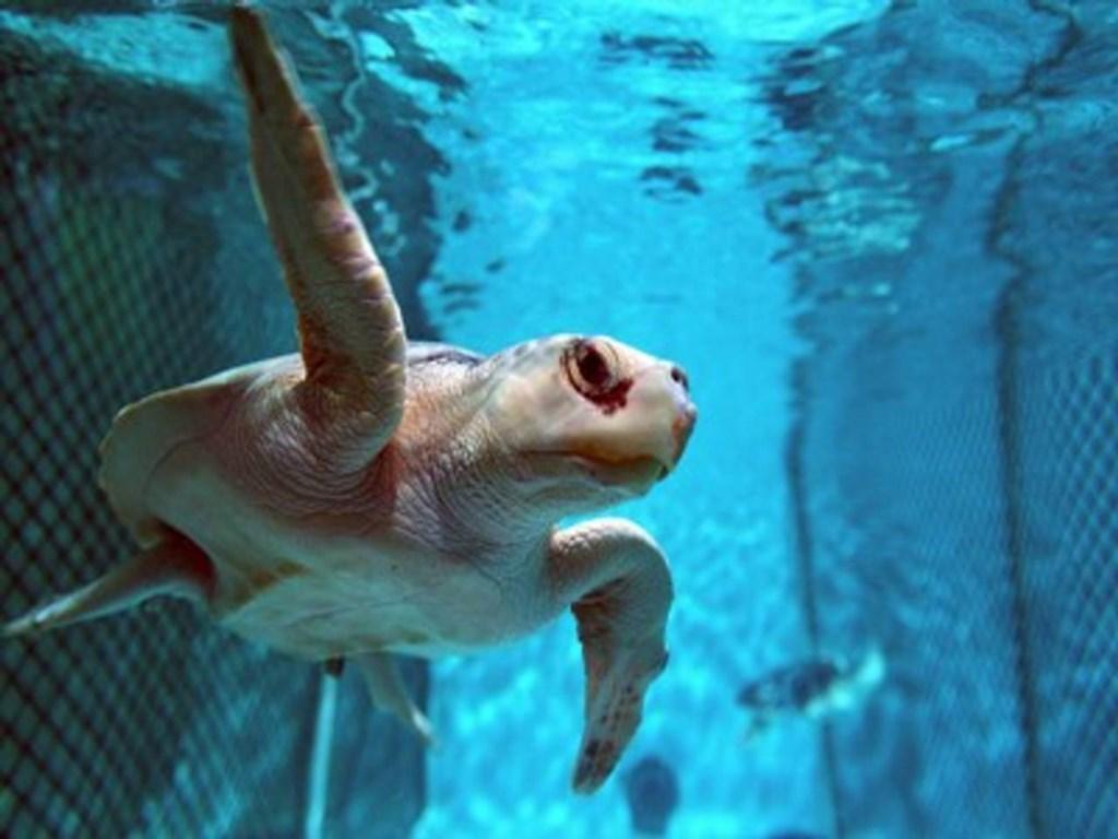 Visit the New England Aquarium!