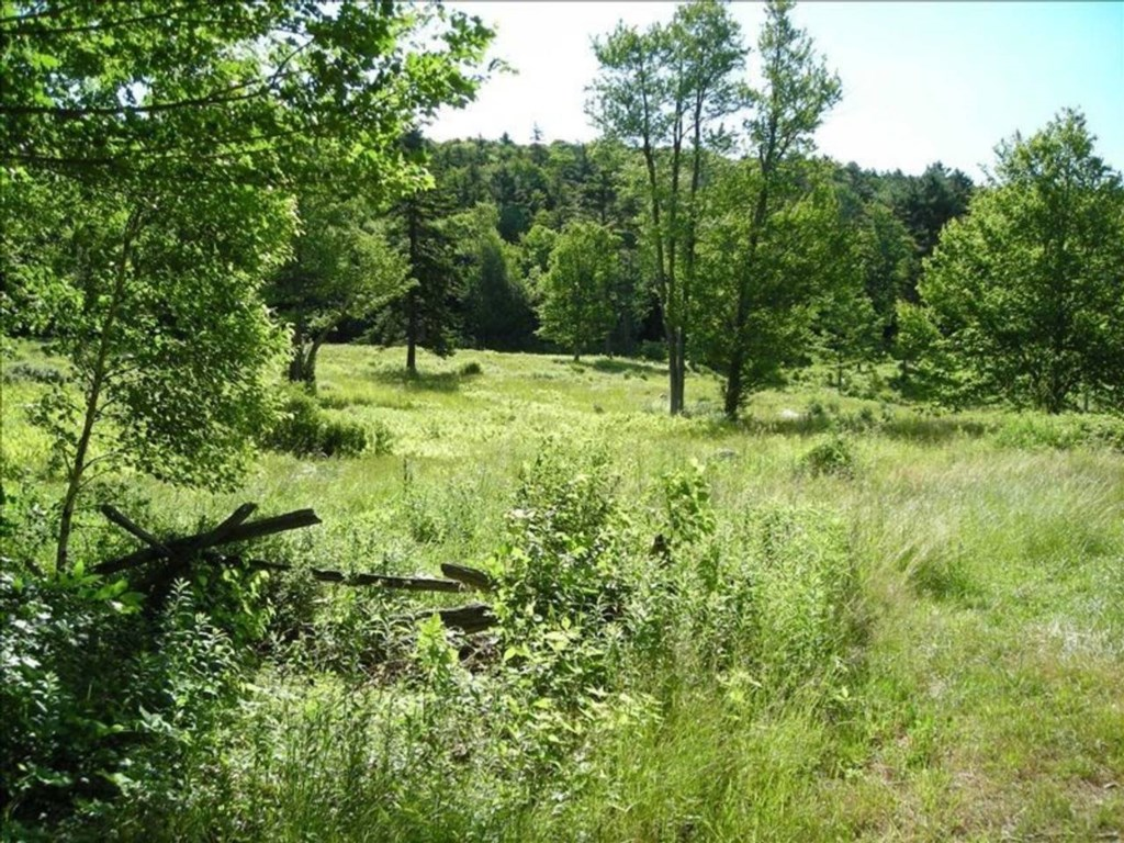 One of several meadows on the property