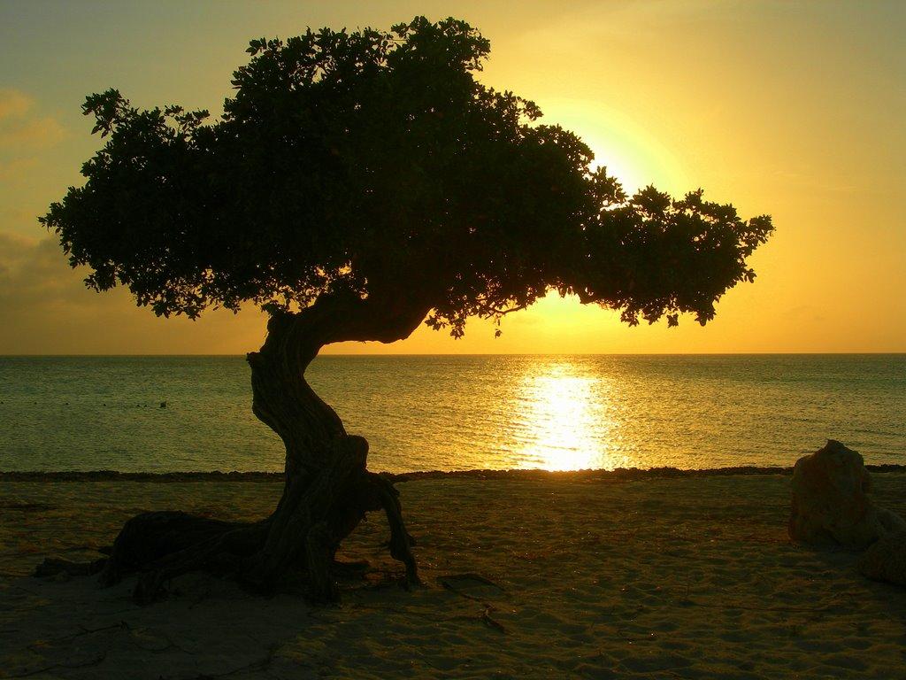 Beautiful sunset with Aruba's Divi tree