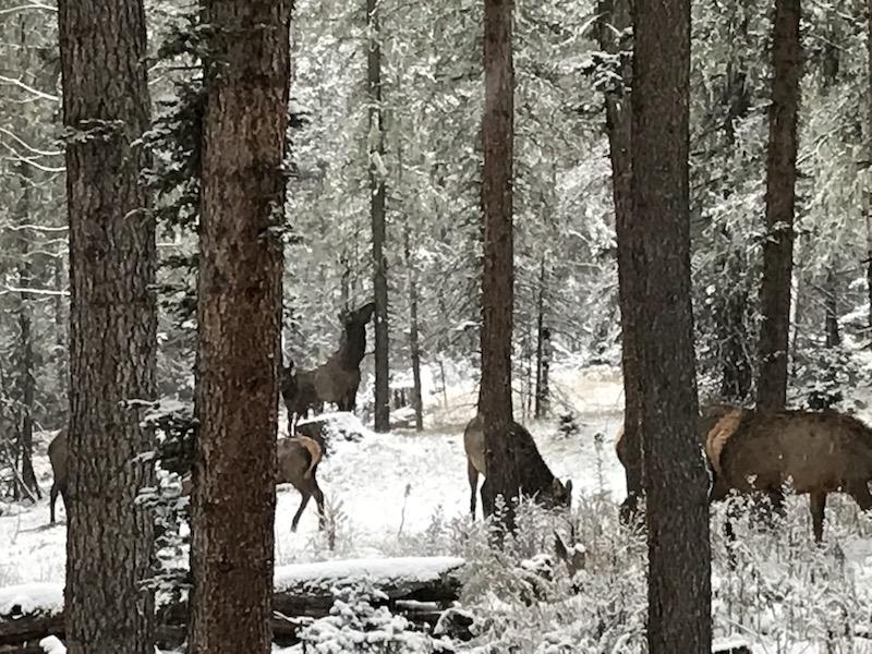 29 Elk on property 2.jpg