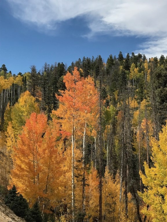 32 Fall 2018 Color.jpg