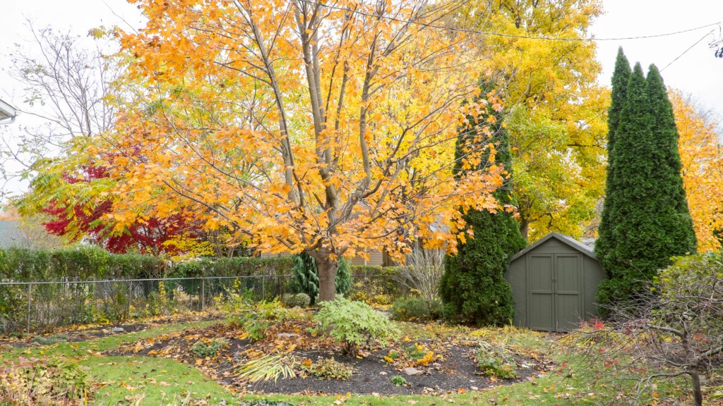 Fall Colours Niagara on the Lake backyard Parkview Cottage