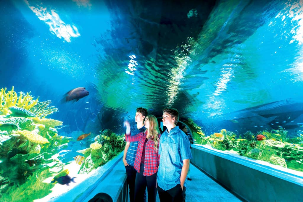 Brand new OdySea aquarium 10 mins away!