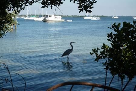 Heron strolling in the bay.jpg