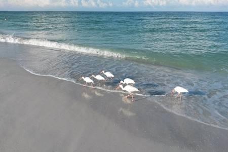 Seagulls on the beach.jpg