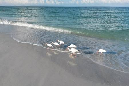 Seagulls on the beach.jpg