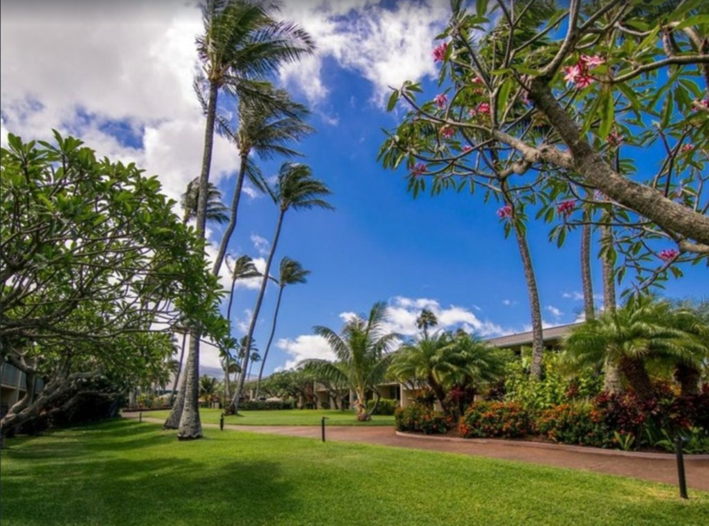 View from the lanai of Napili Shores E 238