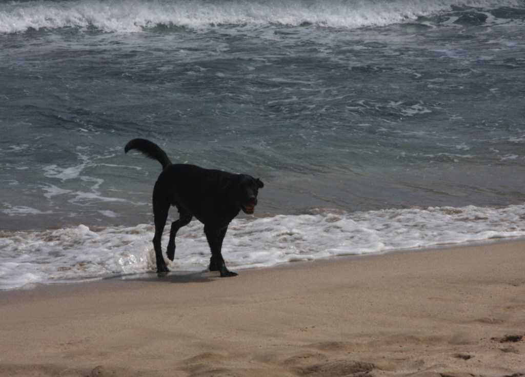 Even dogs enjoy the surf!
