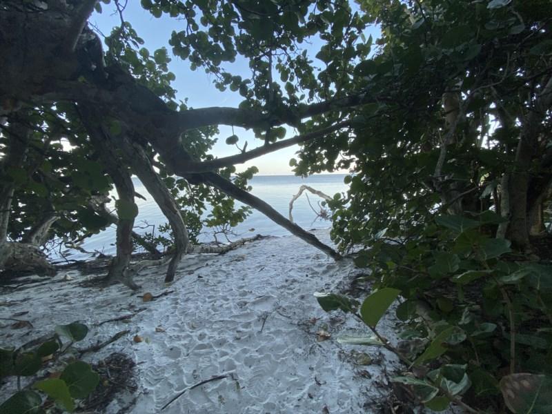 Robinson Preserve - Mangroves