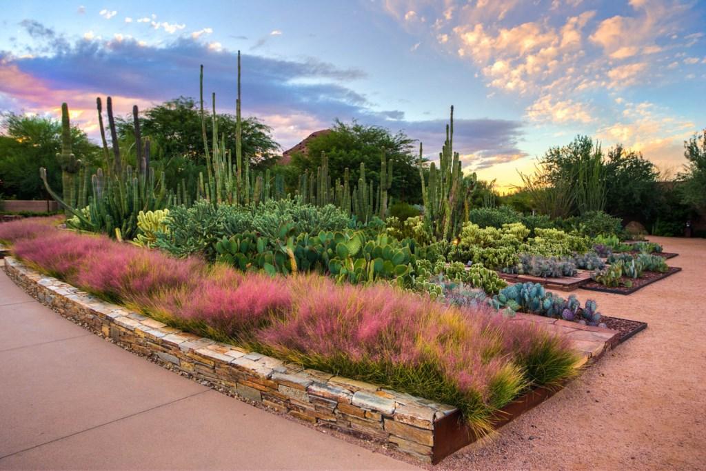 Desert_Botanical_Garden
