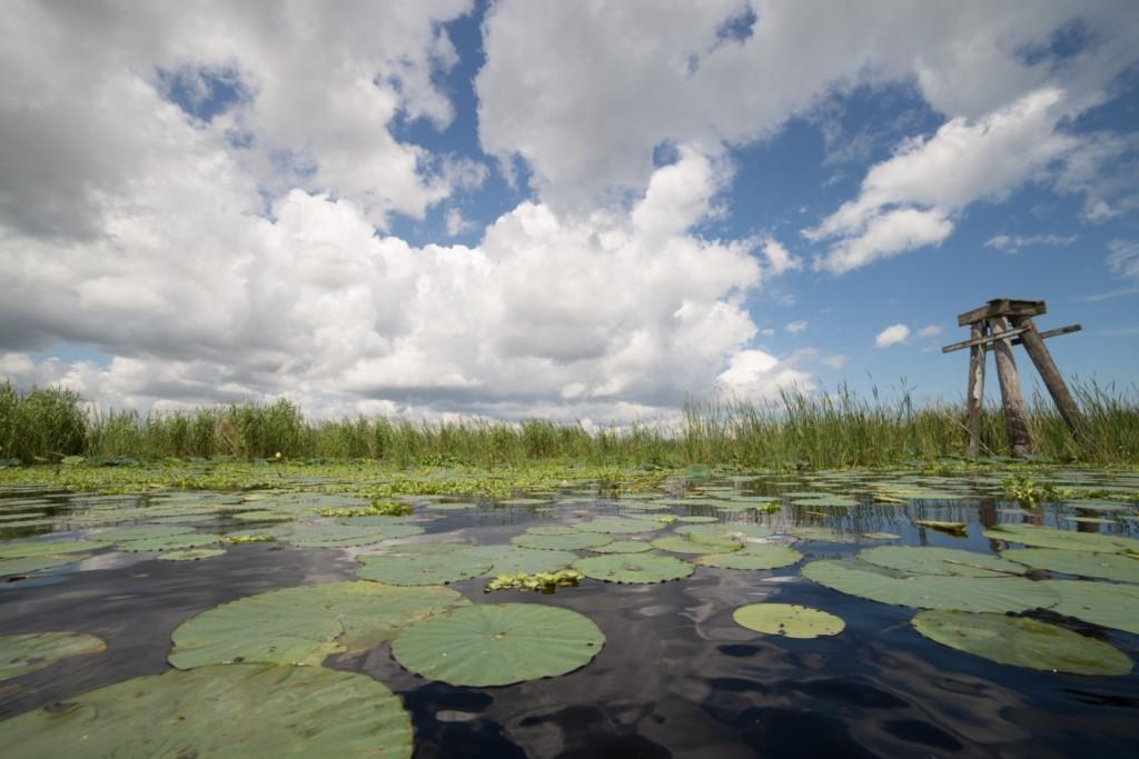 EvergladesNationalPark