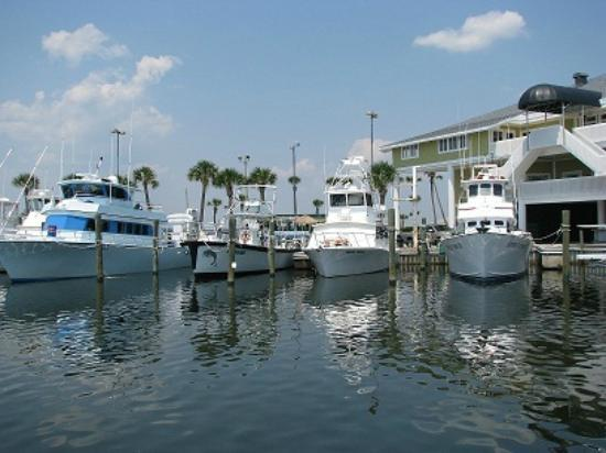 Lots of fishing charters