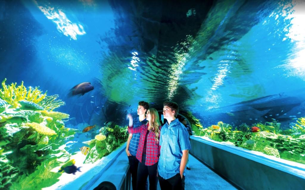 07 OdySea Aquarium.jpg