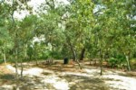 Picnic area in nature walk.jpg