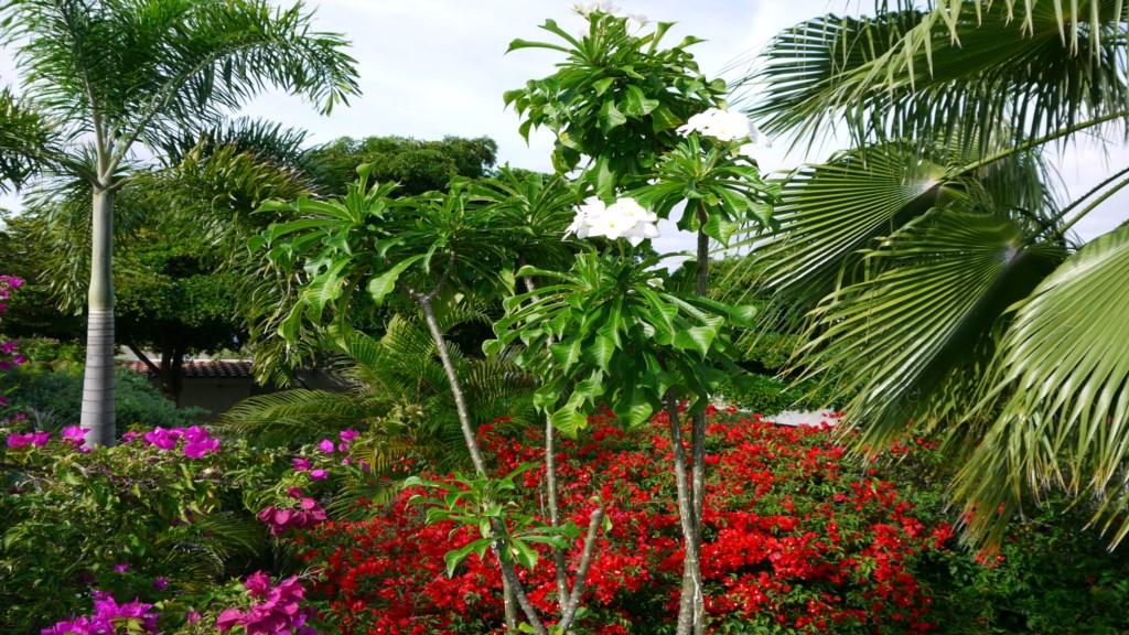 Tropische tuin 1920x1080.JPG