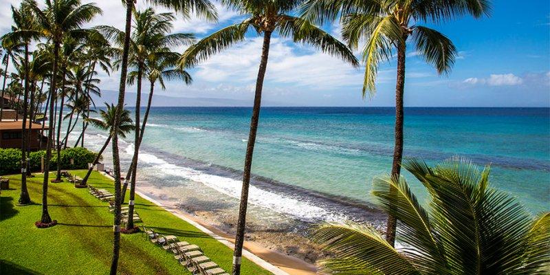 Coconut palm trees are signature Hawaii.