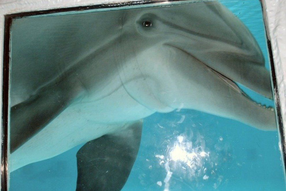 Dolphin viewing available at the Gulfarium or on boat cruises.