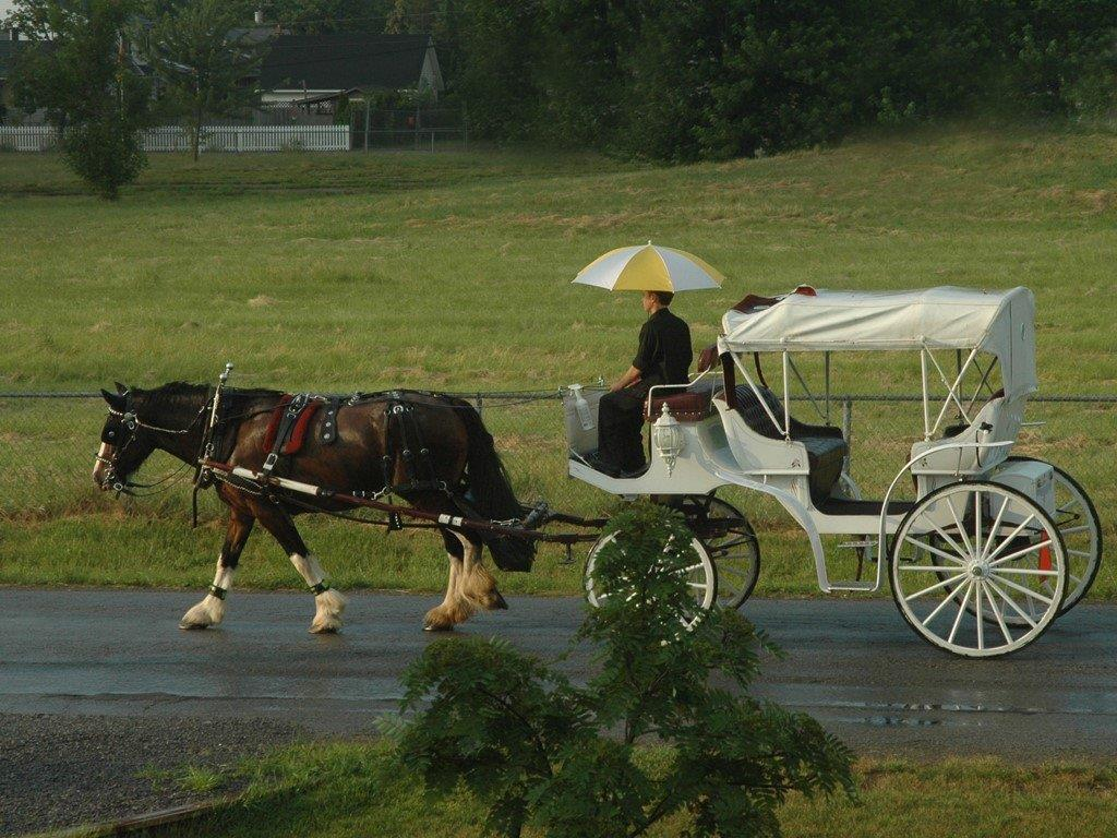Begin your romantic horse and carriage ride right across the street - The White House - NOTL