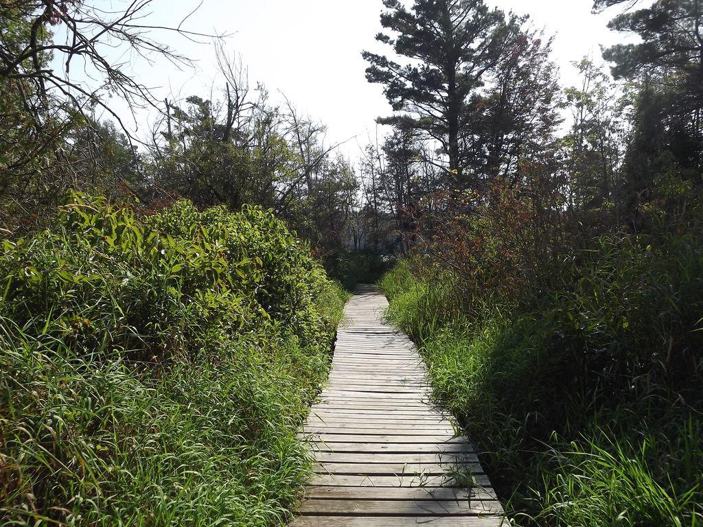 Path to Long Lake