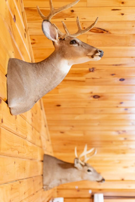 Most of the mounted animals inside the home were harvested on the property.