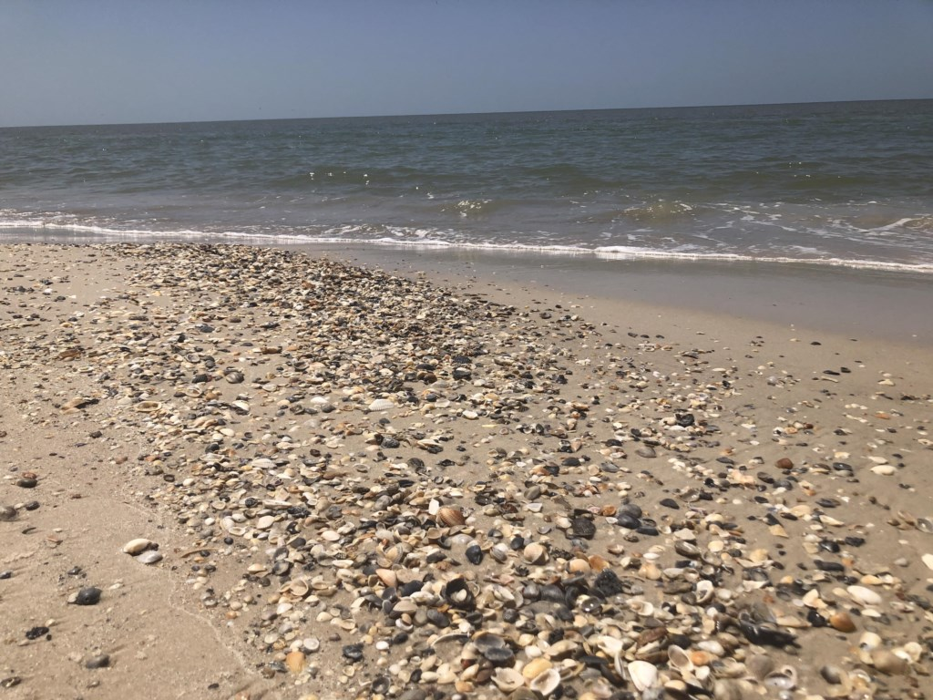 ...the beach (with great shelling opportunities)
